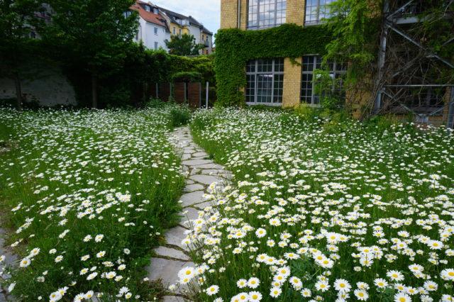 Blumen-Kräuter-Rasen