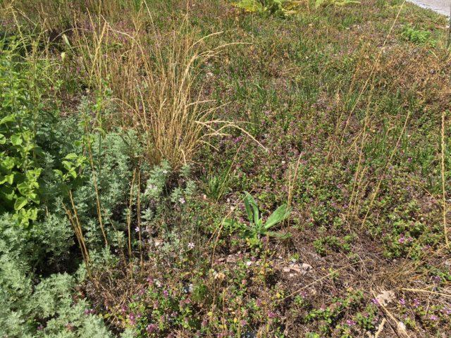Blumen-Schotter-Rasen