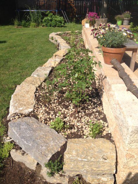 Bepflanzung Trockenmauer